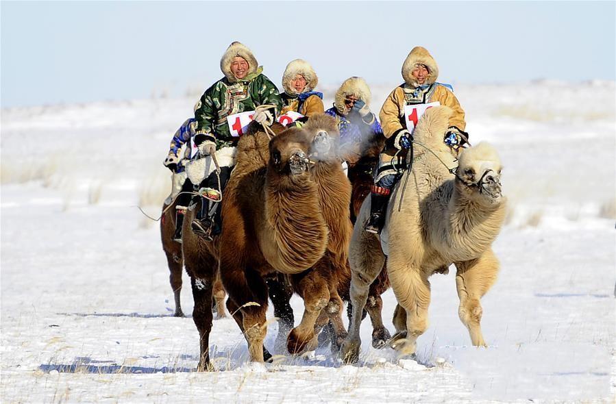 赛骆驼.jpg